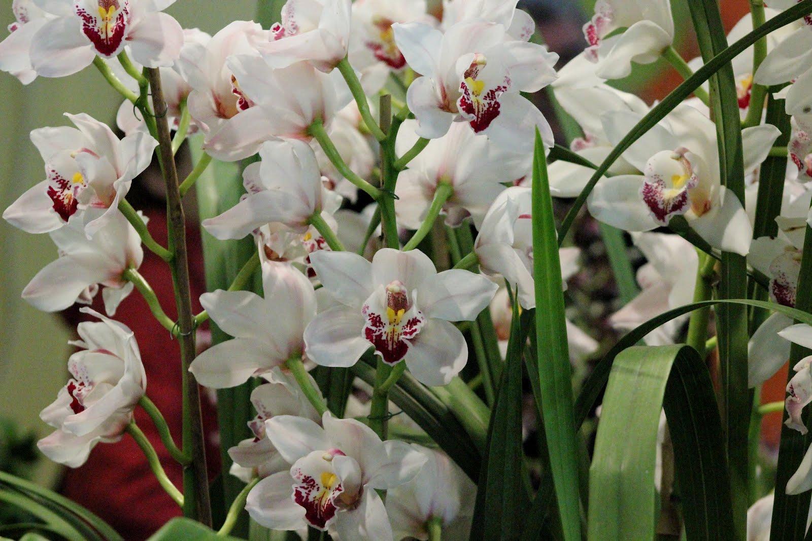 comment s occuper d'une orchid�e en pot ?